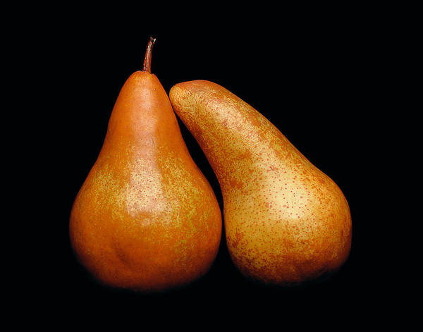 Pear Poster featuring the photograph Loving Pair by Gary Cloud