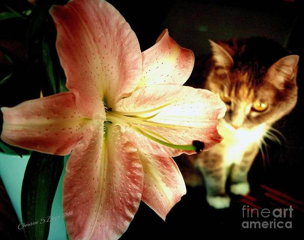Lily Poster featuring the photograph Lucy With Lily by Christine Zipps