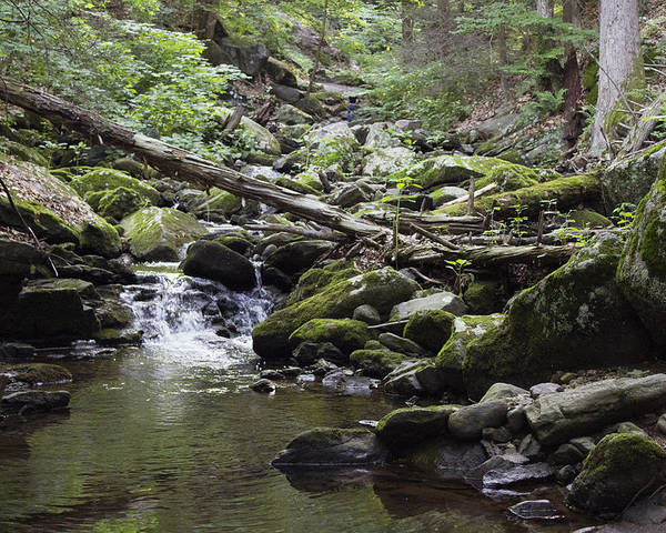 Landscape Poster featuring the photograph Lush Stream And Canopy Foliage by Geneva Renegar