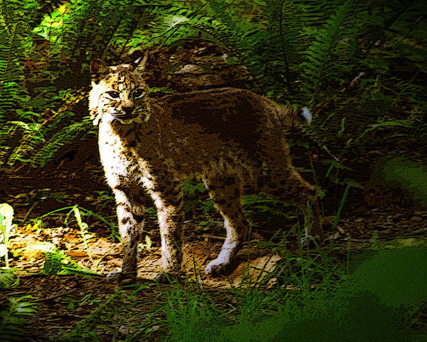 Art Poster featuring the painting Lynx Rufus by David Lee Thompson