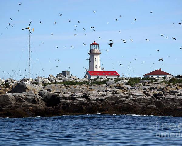 Machias Seal Island Poster featuring the photograph Machias Seal Island Lighthouse by Brenda Giasson