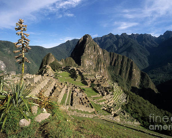 Machu Picchu Poster featuring the photograph Machu Picchu And Bromeliad by James Brunker