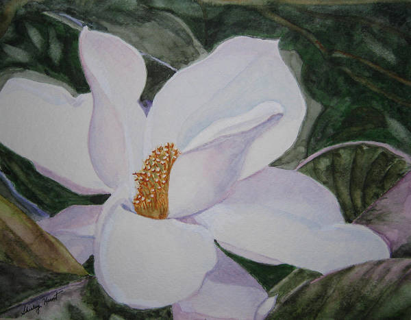 Nature Poster featuring the painting Magnificent Magnolia by Shirley Braithwaite Hunt