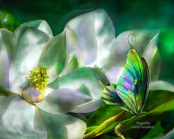 Magnolia Poster featuring the mixed media Magnolia by Carol Cavalaris