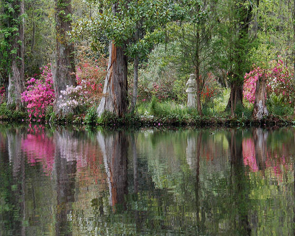 Magnolia Plantation Poster featuring the photograph Magnolia Plantation Gardens Series Iv by Suzanne Gaff