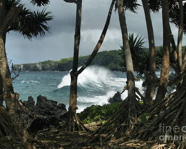 Aloha Poster featuring the photograph Mahama Lauhala Keanae Peninsula Maui Hawaii by Sharon Mau