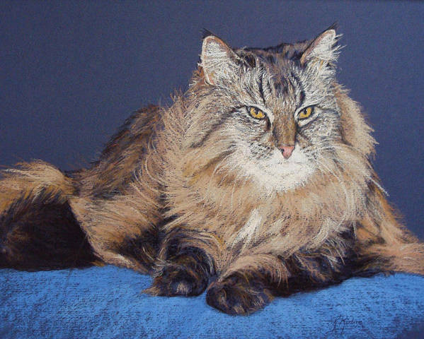 Maine Coon Cat Paintings Poster featuring the painting Maine Coon Kitty by Kay Ridge