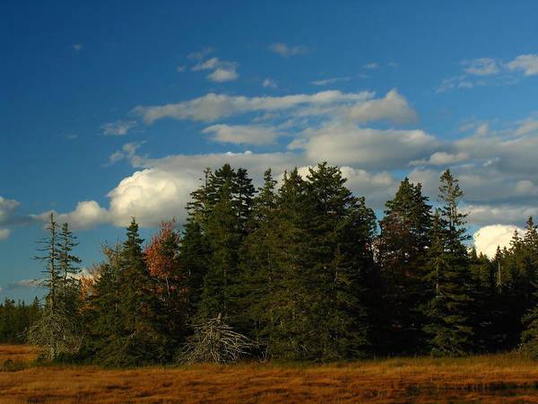 Landscape Poster featuring the photograph Maine Landscape Photography by Juergen Roth