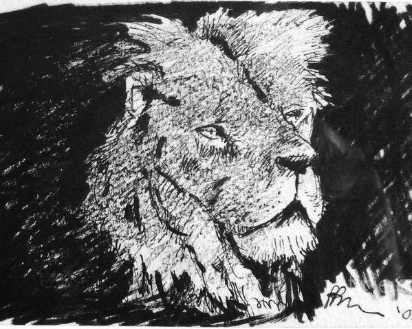 Male Lion Portrait Poster featuring the drawing Male Lion Portrait by Paul Miller