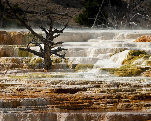Mammoth Hot Springs Poster featuring the photograph Mammoth Hot Springs Beauty by Chad Davis