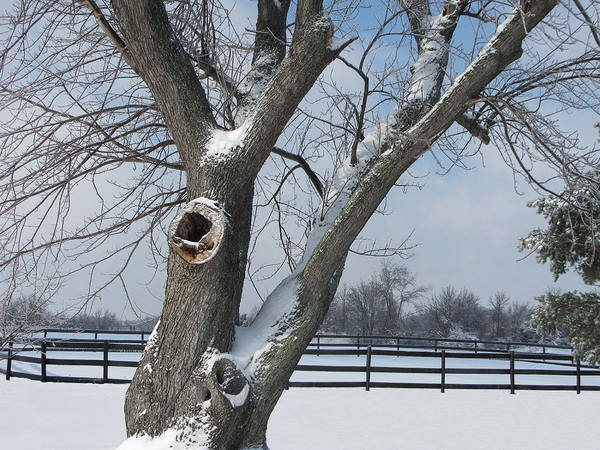 Winter Poster featuring the photograph Maple In Winter by Martie DAndrea