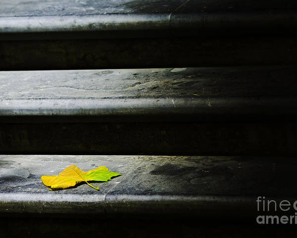Maple Leaf Poster featuring the photograph Maple Leaf On Step by Sheila Smart Fine Art Photography