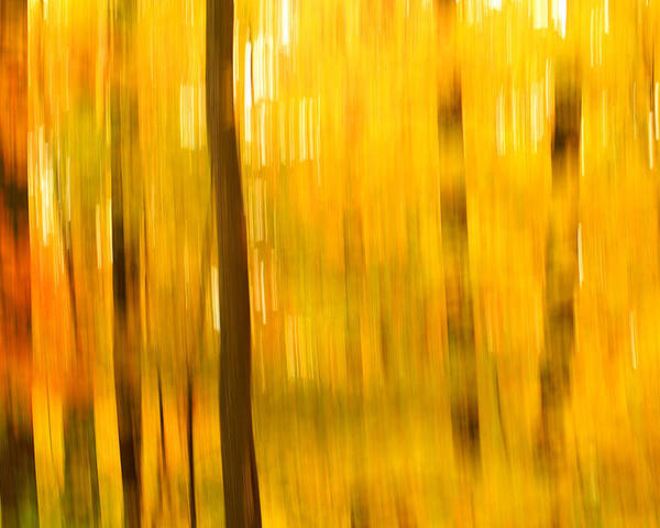 Abstract Photo Poster featuring the photograph Maple Magic by Bill Morgenstern