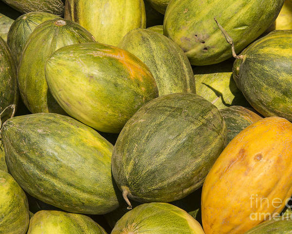 Merkezi Gokceada Island Poster featuring the photograph Market Melons by Bob Phillips