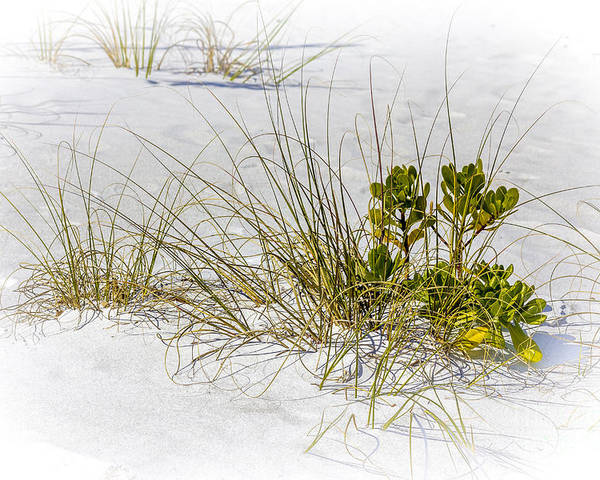 Fort Desoto Beach Poster featuring the photograph Marngrove And Sea Oats by Marvin Spates