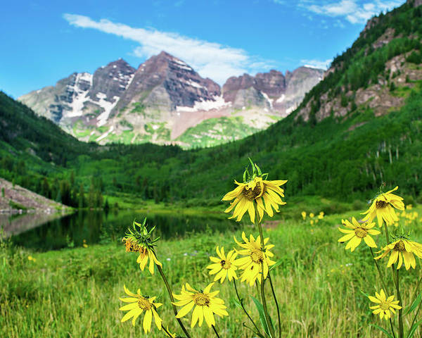 Landscape Poster featuring the photograph Maroon Sunflowers by Krista Giese