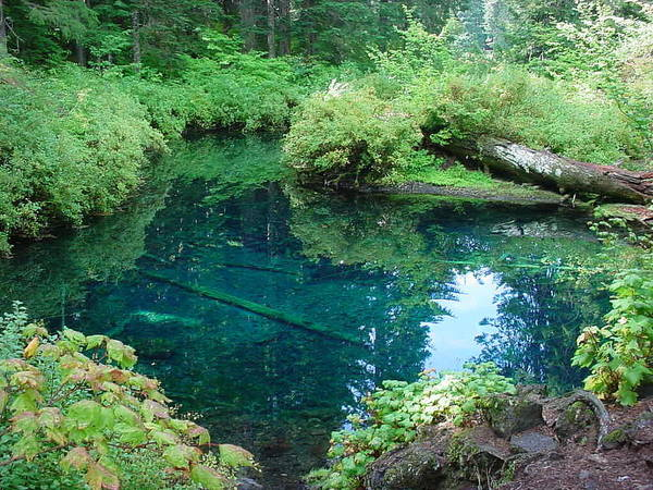 Landscape Poster featuring the photograph Mckenzie River, Oregon by Val Conrad