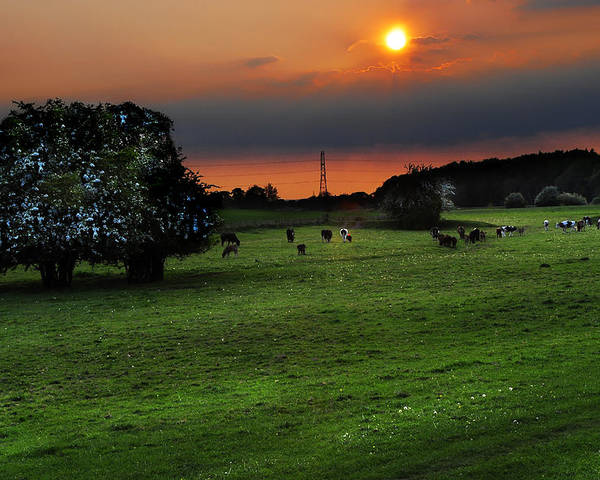 Countryside Poster featuring the photograph Meadow Field by Svetlana Sewell
