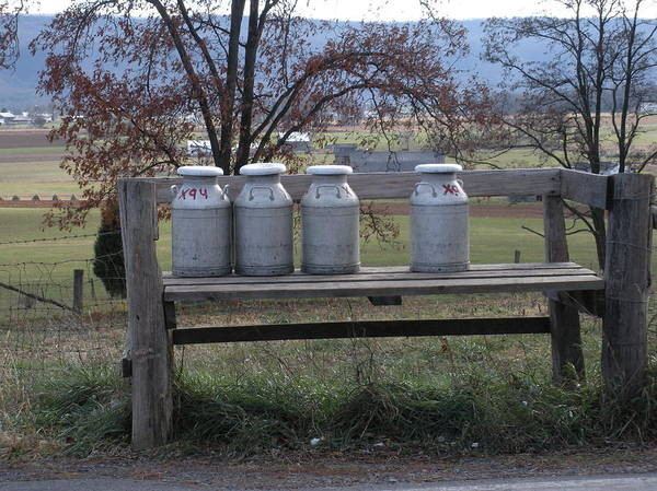 Milk Cans Poster featuring the photograph Milk Cans Waiting For Pickup by Jeanette Oberholtzer