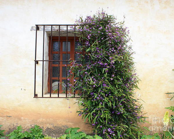 Purple Flowers Poster featuring the photograph Mission Window With Purple Flowers by Carol Groenen