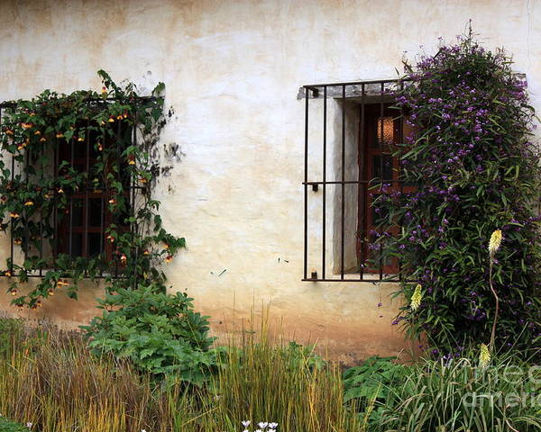 Vines Poster featuring the photograph Mission Windows by Carol Groenen