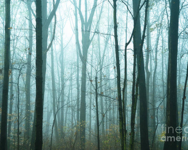 Woods Poster featuring the photograph Misty Forest by John Greim