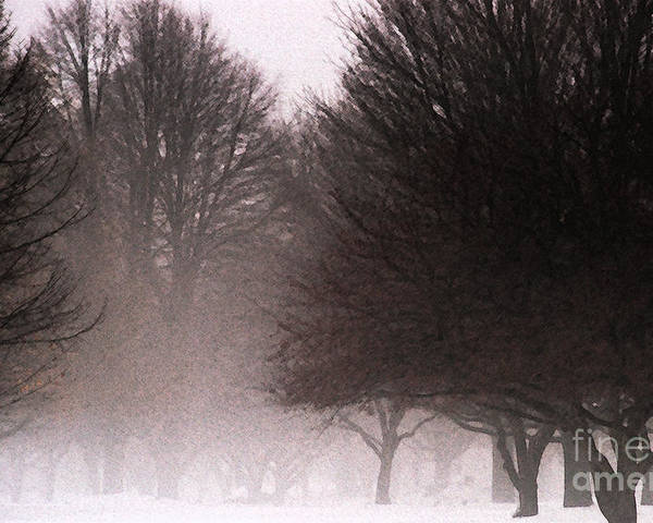 Tree Poster featuring the photograph Misty by Linda Shafer