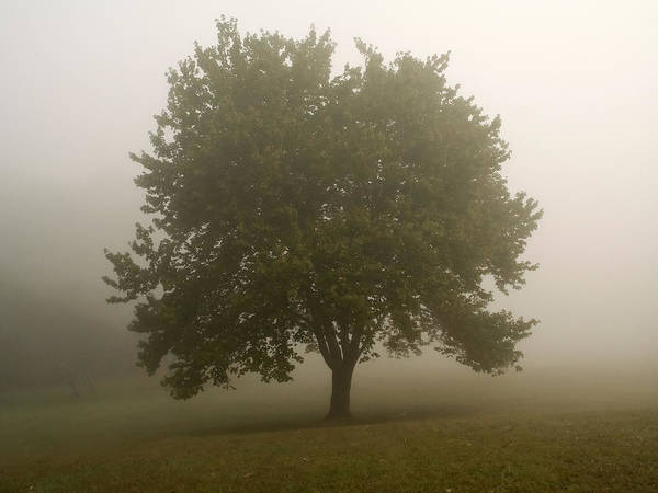 Tree Poster featuring the photograph Misty Morning Tree by Andrew Kazmierski