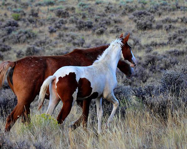 Horse Poster featuring the photograph Mom And The Filly Leaving by Rod Giffels
