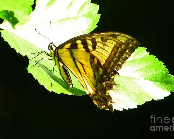 Butterfly Poster featuring the photograph Moment Of Life by Galina Melnik