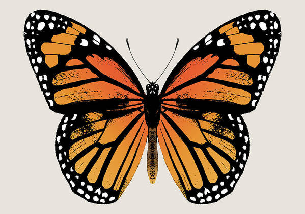 Monarch Butterfly Poster featuring the digital art Monarch Butterfly by Eclectic at HeART