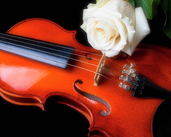 White Poster featuring the photograph Moody Violin And Rose by Garry Gay