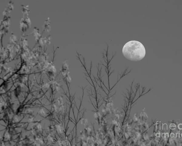 Moon Poster featuring the photograph Moon And Trees B And W by Jeanette Fiveash