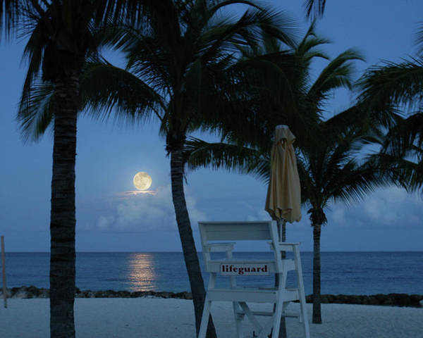 Beach Poster featuring the photograph Moonlight Serenade by Angie Bechanan