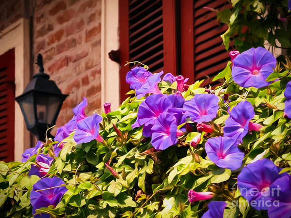 Shutter Poster featuring the photograph Morning Glories In Nola by Kathleen K Parker
