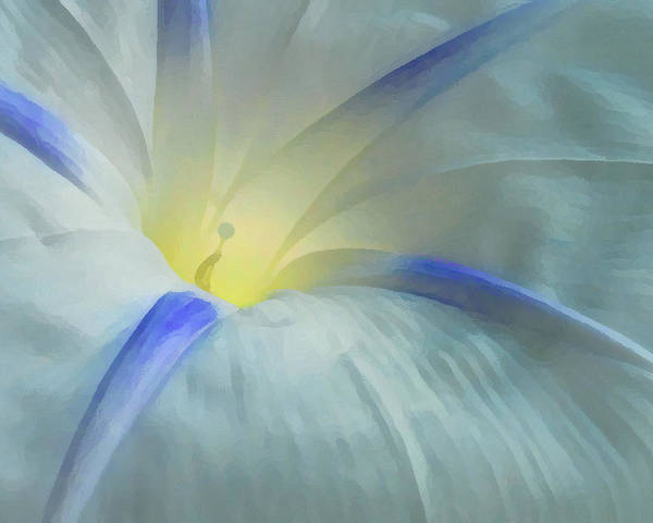 Morning Glory Poster featuring the photograph Morning Glory by Gene Sizemore