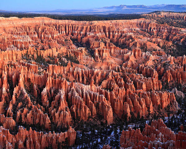 Bryce Poster featuring the photograph Morning Light In Bryce Canyon by Pierre Leclerc Photography