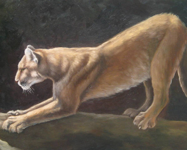 Cougar Poster featuring the painting Morning Stretch by Oksana Zotkina