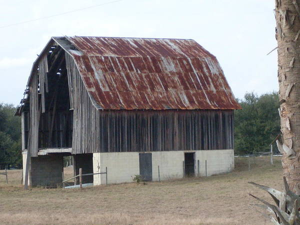 Barn Florida Photograph Poster featuring the photograph Moss Bluff Barn by Warren Thompson