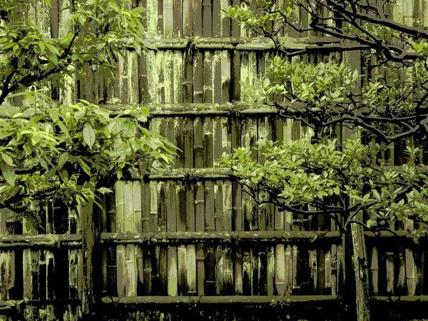 Moss Poster featuring the photograph Mossy Bamboo Fence - Digital Art by Carol Groenen