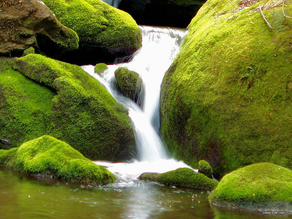 Nature Poster featuring the photograph Mossy Falls by Johann Todesengel