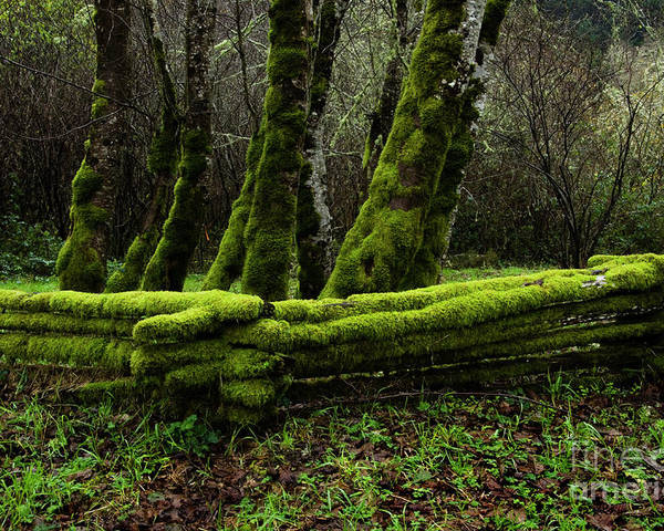 Moss Poster featuring the photograph Mossy Fence 3 by Bob Christopher