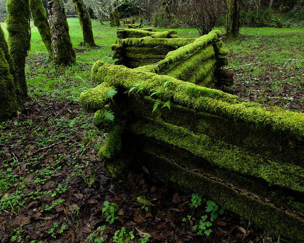 Moss Poster featuring the photograph Mossy Fence 5 by Bob Christopher