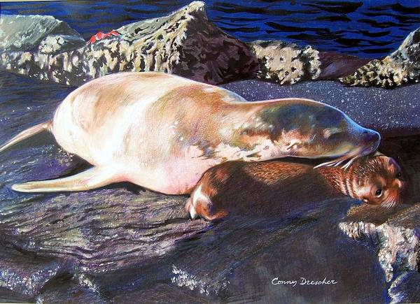 Sea Lion Poster featuring the mixed media Mother And Child Sea Lion by Constance Drescher