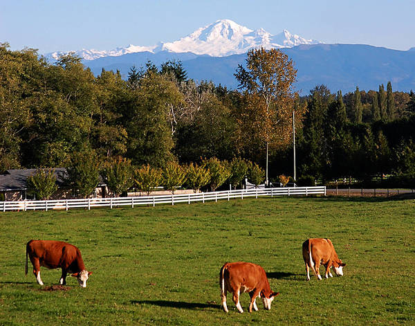 Mt. Baker Poster featuring the photograph Mount Baker From Langley Bc by Marion McCristall