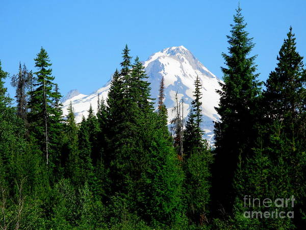 Mt. Hood Poster featuring the photograph Mount Hood Majestic by PJ Cloud