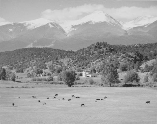 Landscape Poster featuring the photograph Mountain Meadow by Allan McConnell