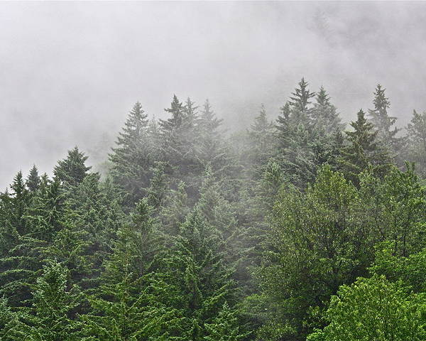 Trees Poster featuring the photograph Mountain Mist by Diana Hatcher