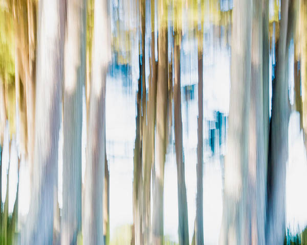 Trees Poster featuring the digital art Moving Trees 3 30-45 by Gene Norris