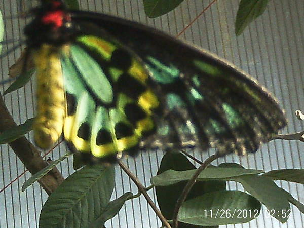 Butterfly Of Many Colors Poster featuring the photograph Multi-colored Butterfly by Doris Giardini